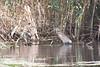 Καλοχώρι, Κρυπτοτσικνιάς (elkost) Tags: καλοχώρι kalochori kalochórion birds κρυπτοτσικνιάσ ardeolaralloides