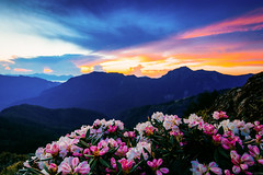 Colorful Dawn /  (Cheng-Yang, Chen) Tags: mountain sunrise canon dawn twilight taiwan wideangle rhododendron 6d   nantou  alpinerose hehuanshan    mthehuan  ef1635mmf4lisusm