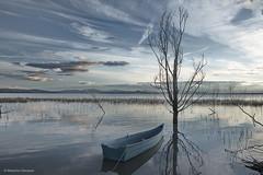 Blue (Massimo_Discepoli) Tags: blue lake tree water clouds trasimeno