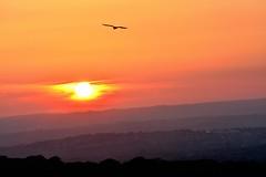 sundown (doods-on on weekends) Tags: sunset sun mountains bird clouds cloudy dusk hills valleys