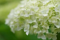 28052016 (HIROKO321) Tags: flower macro nature pentax
