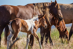 What????? (Just Used Pixels) Tags: utah us unitedstates colts wildhorses foals dugway