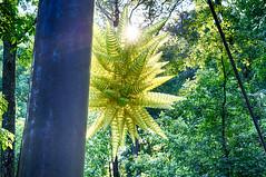 DSC04985-87_HDR (Capt Kodak) Tags: photomerge atlantabotanicalgarden dalechihuly glasssculpture chihulyinthegarden niksoftware hdrefexpro2 nikcollectionbygoogle everynowandthenyouneedalittleculture