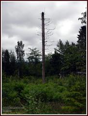 Otamus - Tilankierros (PeepeT) Tags: trecking vaellus sastamala otamus tilankierros