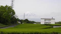 Mt. Fuji and green tea, Fuji (EMkro) Tags: original mountain green berg japan spring asia raw fuji tea backpacking tee frhling grner unbearbeitet