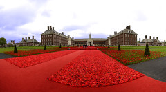 Chelsea Flower Show 2016 (Simon Caunt) Tags: show red panorama flower london wool carpet knitting memorial chelsea widescreen wwii australia panoramic poppy poppies tribute ww1 remembrance aussie largeformat anzac rhs d800 wideview oblong 2016 thesomme phillipjohnson wideformat lynnberry margaretknight nikond800 afsnikkor2470mmf28 widefieldpanorama largeformatimagery