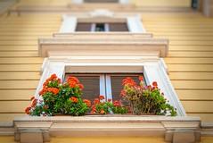 Milan, Italy (garyullah) Tags: flowers red italy orange milan yellow italia apartment milano windowsill