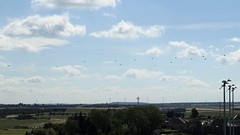 Apache and Chinook Helicopter landing at LEJ Leipzig Halle Airport Germany (roli_b) Tags: apache chinook helicopter landing approaching lej leipzig halle airport leipzighalle flughafen flugplatz aeroport aeropuerto hubschrauber helikopter aircraft avion aereo germany deutschland alemania
