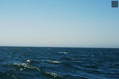 Anacapa Island Day Trip (Stephanie_Asher) Tags: ocean california blue sea summer water birds canon 50mm boat losangeles gulls f18 nationalparks venturacounty channelislands seabirds anacapa polarizingfilter digitalrebelxti