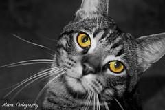 Pussycat (Mone-Photography) Tags: cat pussycat kittycat