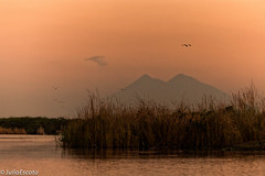 Amanecer Chapn (Julio Escoto) Tags: water birds sunrise dawn volcano agua guatemala aves amanecer rivers nubes volcanes canales