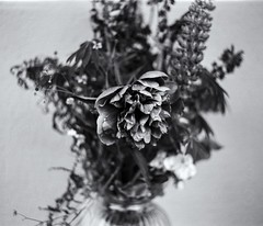 Still Life 3 (micke_wall) Tags: life flowers white black mamiya nature analog still bokeh mamiyarb67 natuer