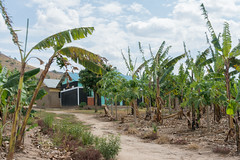 Travelling around Uganda (Nyakigandu) (MadGrin) Tags: africa orientale uganda repubblica travel viaggio westernregion uga