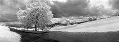 Kein Winderdienst! (schoeband) Tags: bw landscape schweiz switzerland suisse infrared svizzera aargau panoramiccamera wolberg gipfoberfrick konicainfrared750nm noblex135u