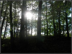 Silhouette Of Forest In Late Spring With The Sun Shining Through The Trees - Real Photo Without Color Editing - Photo by STEVEN CHATEAUNEUF - June 12, 2016l (snc145) Tags: trees sky sun silhouette photo spring seasons autofocus flickrunitedaward stevenchateauneuf june122016
