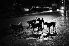 Going home bitch ? (N A Y E E M) Tags: dogs latenight street gmroad chittagong bangladesh stray carwindow availablelight ramadan