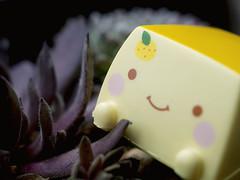 Lemon Slice (Jam-Gloom) Tags: cute japan toy toys tofu olympus kawaii omd japanesetoy hannari toyphotography em5 cutetoy hannaritofu toyography kawaiitoy olympusomd olympusomdem5