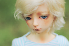 Amory (Luthigern) Tags: bjd gus luts msd tf bluefairy kdf