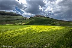 Fiorita monocromatica (BIO_MA Roberto Perucci) Tags: panorama nuvole colori paesaggi castelluccio sibillini parconazionale fioritura