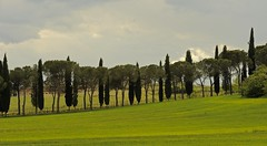 Sinalunga , Toscana (jean-marc losey) Tags: primavera spring italia vert toscana toscane printemps sinalunga italie cyprs pinparasol d700