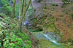 Slowly waters (_Nick Photography_) Tags: creek stream ruscello wetwood nelbosco img6042 nickphotography slowlywaters
