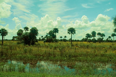 Florida (LiLxATG) Tags: blue trees sky reflection green water field yellow clouds landscape wide palm