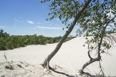 Sandy Desert - DSC01692_ep (Eric.Parker) Tags: camping ontario swimming lakeontario sanddune bathingsuit sandbanks quinte sandbanksprovincialpark princeedwardcounty quintesisle