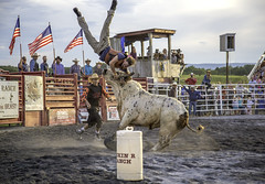 Rodeo - Union Bridge, Maryland (crabsandbeer (Kevin Moore)) Tags: people horse sports animals kids rural speed children cowboy action injury balls bull explore nerve violence rodeo americana newmarket airborne bullriding smalltown gored tossed unionbridge explored battleofthebeast