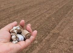 Found (:Linda:) Tags: germany found village hand finger thuringia soil discarded porcelain veilsdorf brden