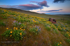 Scenic Parking (pdxsafariguy) Tags: sunset abandoned grass car clouds washington spring rust seasons decay wildflower lupine dalles balsamroot tomschwabel dallesmountainranch columbiahills