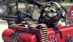 Yoda_the BRAVE (Rafelicious) Tags: red dog pet soldier army war gun cosplay smoke helmet pug brave bullets ammo ammunition warmachine