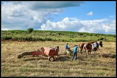 Summer on the Farm (ioensis) Tags: boy summer horses clouds farmers farm father july iowa amish fields hay bales northeast baler jdl 2013 ioensis 23072006067tmf1b