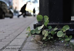 Urban Forest (Sheldon Emberly) Tags: pavement urbannature saplings urbanscene nikond3 nikkor28105mmlens