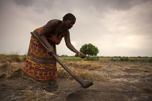 Mary Kapwamba tills her field. Photo by Felix Clay/Duckrabbit, 2012.
