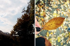 every leaf is a flower (you are the poet) Tags: autumn nature leafs