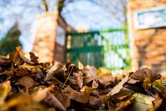 2013-10-31-Herbstfotos-20131031-085858-i082-p0050-SLT-A77V-16_mm-.jpg
