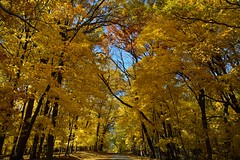 Autumn Foliage [7526] (cl.lin) Tags: nature midwest iowa foliage lakemcbride nikond600