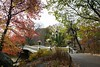 New York, Neeew York! (Solomulala | mostly weekends ;-( !) Tags: city travel bridge autumn trees usa newyork canon landscape centralpark nuevayork 2013 5dmarkiii solomulala murielcdejong