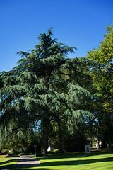 (nathascha) Tags: germany deutschland pentax schwarzwald stadtpark lahr badenwürttemberg sigma30mmf14 nathascha k5ii