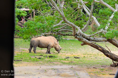 Kilimanjaro Safaris (Disney Dan) Tags: africa travel vacation usa spring orlando florida disney safari disneyworld april fl wdw waltdisneyworld harambe animalkingdom disneysanimalkingdom kilimanjarosafaris 2013 disneypictures disneyparks disneypics disneysanimalkingdomthemepark wdwapril2013