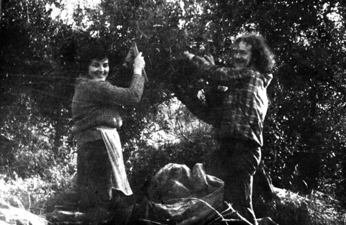 Jean Olive Picking in Crete 1970s