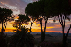 Tramonto in Toscana (FiPremo) Tags: canon eos tramonto toscana sole saturnia arancio controluce pianta 50d