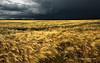 Ébredő sötétség / Darkness Rising (Márk Borbély Photography) Tags: summer storm nature landscape nikon hungary mood abigfave