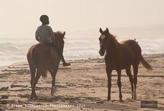 Horses and Their Boy (Nicky Highlander Photography) Tags: ocean morning boy sea horses horse sunlight boys sunshine photography ride profile atlantic fieldtrip barbados caribbean awards rider density neutral 2014 saintandrew 2015 longpond honorablemention nifca barbadosphotographicsociety