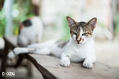 Meow (Dodzki) Tags: cat portraits 50mm nikon bokeh d600 14g bokehlicious nikond600