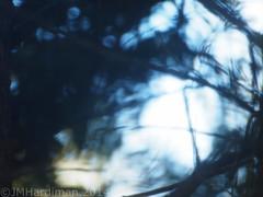 Shooting a Bird Through a Dirty Window (jim29028) Tags: sky abstract motion blur tree bird window female nest cardinal branches humor olympus screen dirty mistake needles 70300mm zuiko 43 e5 blurrymess zd fourthirds