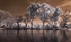 Trees And Clouds At Santee Lakes (Bill Gracey) Tags: sky water clouds ir highcontrast vegetation infrared sandiegocounty santee santeelakes convertedinfraredcamera