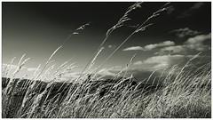 As the sun descends to the horizon....... (Mark Winterbourne | markwinterbourne.com) Tags: england grass canon photography bay photographer unitedkingdom leeds cumbria seashore westyorkshire 24105 eos5d haverigg steelgreen canoneos5dmkii markwinterbourne markwinterbournephotographycanoneosbradfordwestyorkshireunitedkingdomleedsyeadon markwinterbournephotographycanoneosbradfordwestyorkshire 100400yeadon httpmarkwinterbournecom