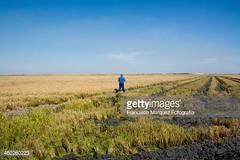 risaia2 (quintaainveruno) Tags: campo fotografia riso risaia adulto figuraintera unapersona caucasico 5055anni orizzonta