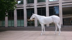 White Horse in the Mall in London (grey_goshawk) Tags: horse white art mall mark wallinger the